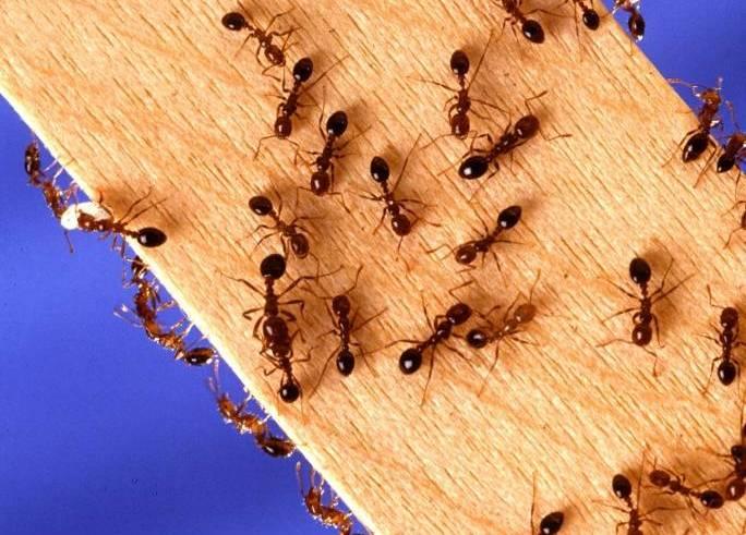 Jak pozbyć się mrówek